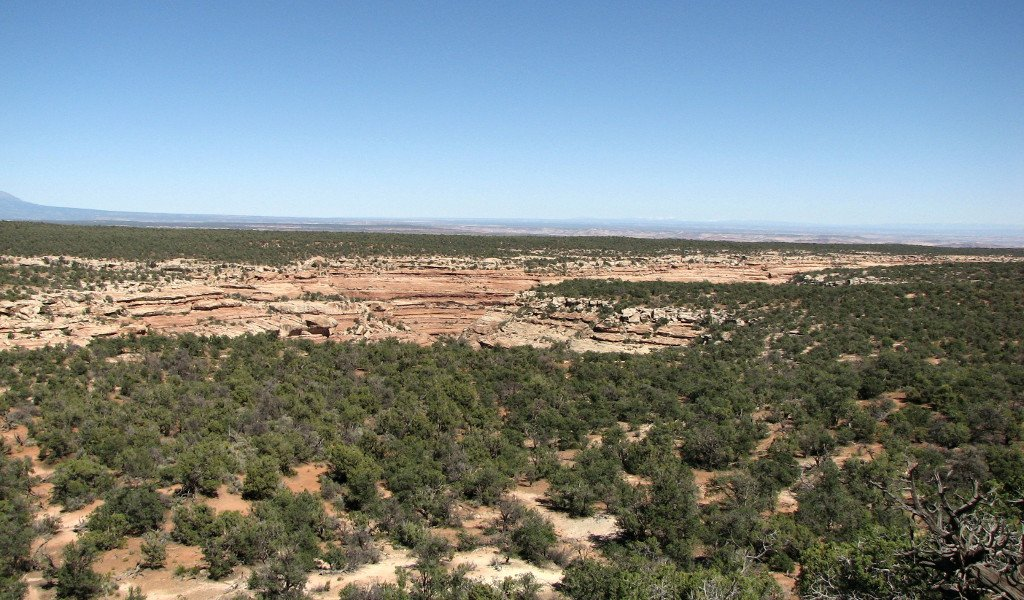 Photo of Cedar Mesa showing Lime Canyon cutting through